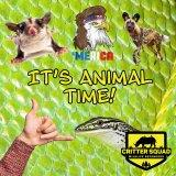 It's Animal Time!