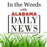 In the Weeds w/ Artur Davis